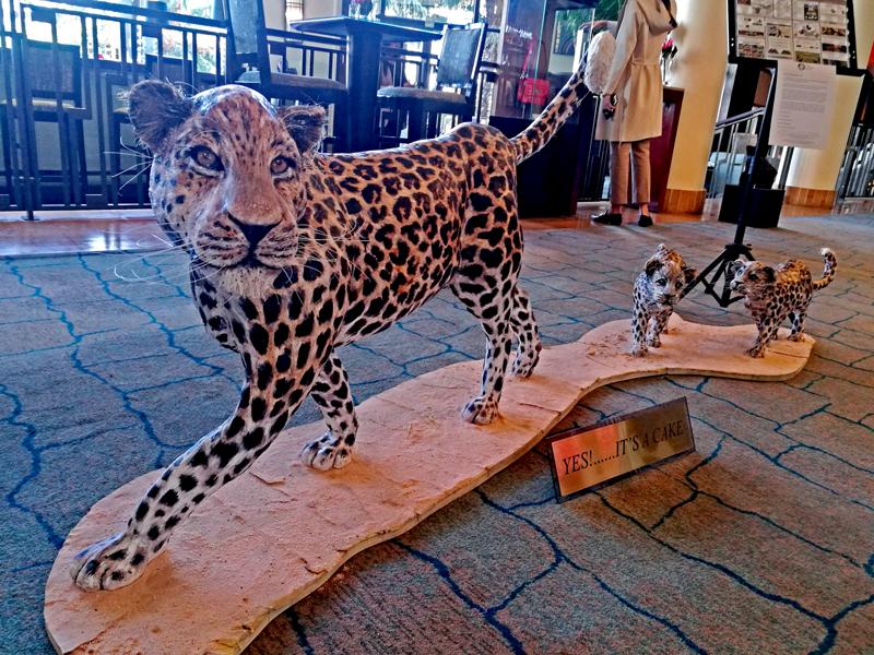 cape-leopard-conservation-cake
